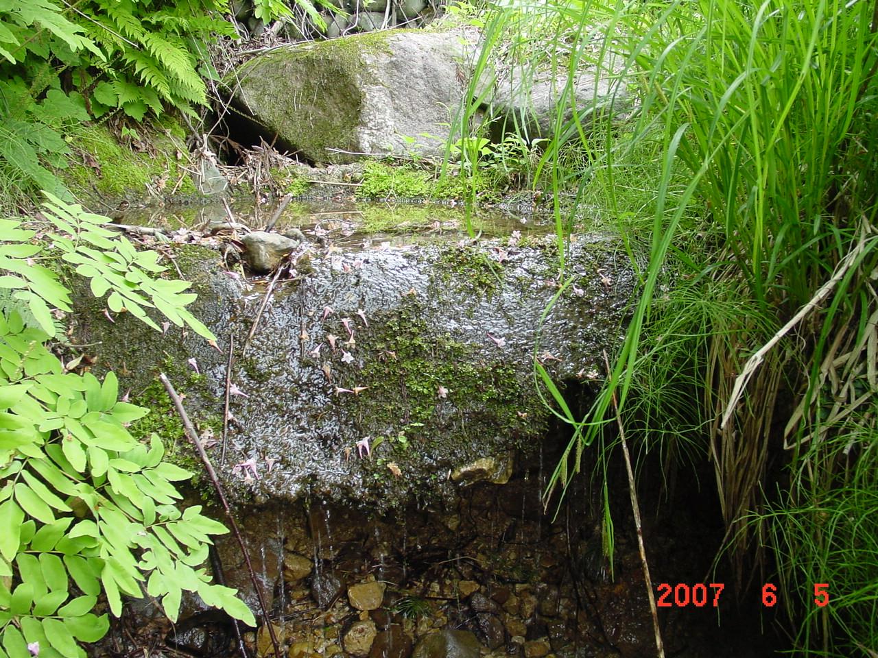 新潟県魚沼市大倉の水源。鳥ヶ峰の一番水